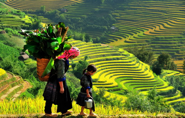 Top 4 places where you can see beautiful rice fields in Viet Nam