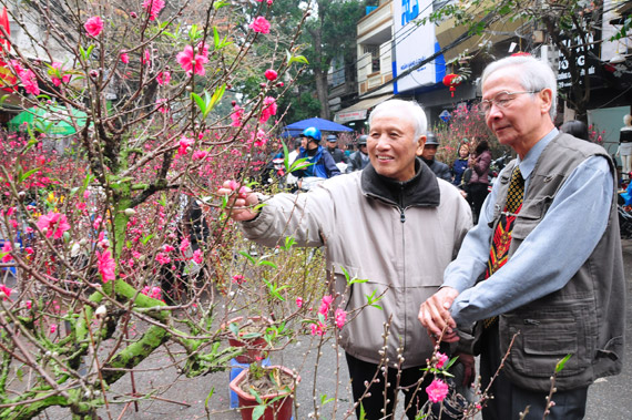TET - Lunar New Year 2019 in Vietnam blossom flower