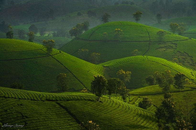 Long Coc - the most beautiful green tea hill in Vietnam